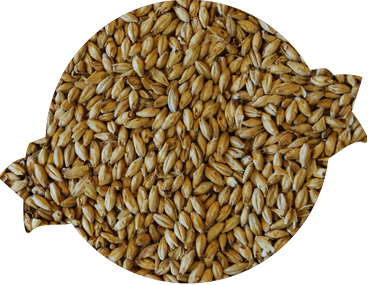Dingemans Pale Malt