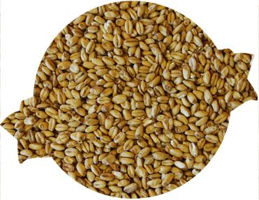 White Wheat