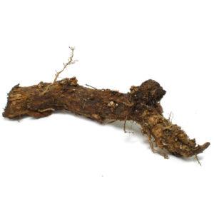 Cascade Rhizome