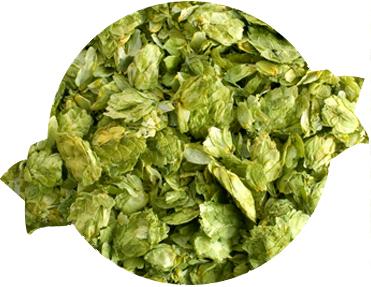 Northern Brewer Leaf Hops
