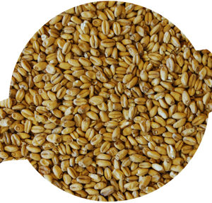 Weyermann Oak Smoked Wheat